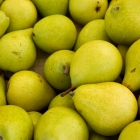 Pear Puree Recipe