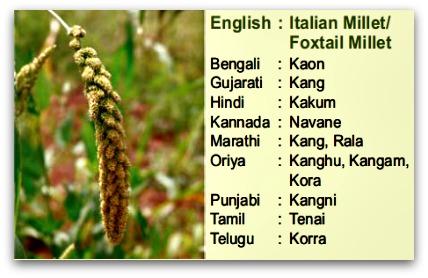 Foxtail millet, tinai, kakum